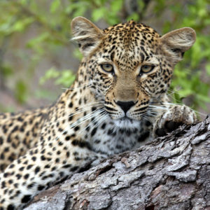 Big Five Safari to South Africa