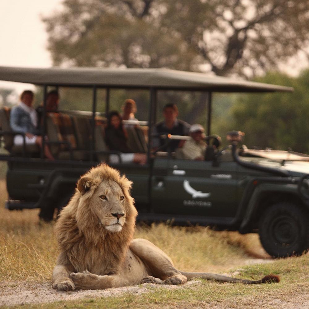 Magnificent wildlife sightings in the Okavango Delta in Botswana