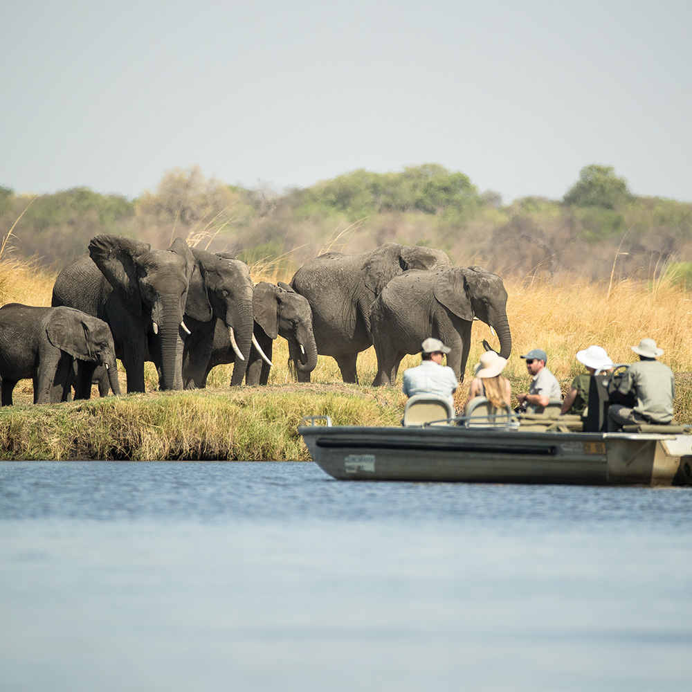 Exceptional elephant encounters on the Chobe River in Botswana
