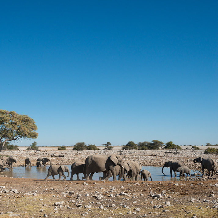 Discover the Etosha National Park in Namibia