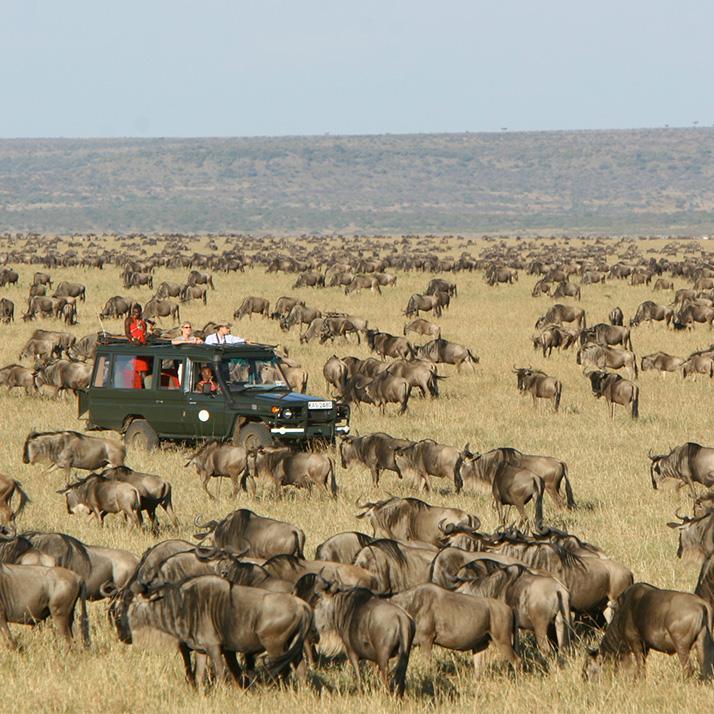 Wildebeest Migration in Kenya