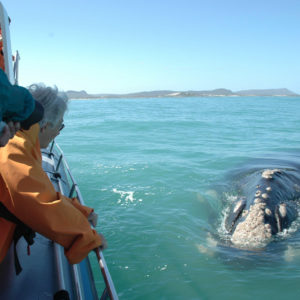 Ocean Safari and Whale Watching in South Africa