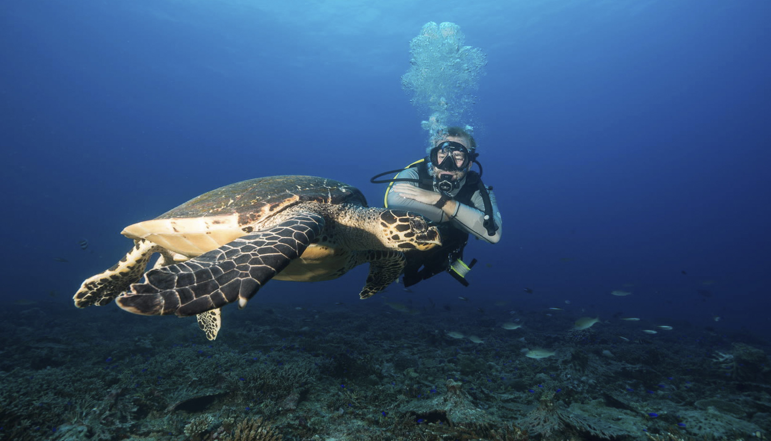 Diving in the Seychelles with North Island