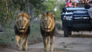 Big Five Safari in South Africa